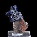 Azurite, Milpillas Mine, Mexico - miniature