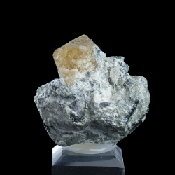 Scheelite, Traversella Mine, Italy - miniature